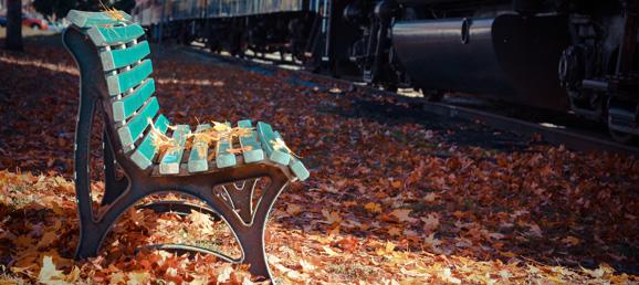 Season of Woe or Wonder: Transitioning to Fall