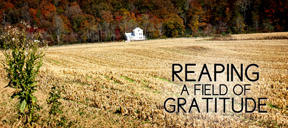 Thriving Through the Holidays: Reaping a Field of Gratitude